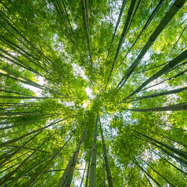 Image for Green Up Your Life:  Learn Practical Action Items for Living a Greener, Less Toxic Life for You, Your Family, and Our Planet webinar